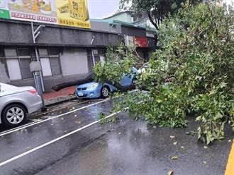 台南東區路樹倒 轎車慘遭壓毀