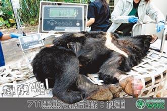 胖4公斤 中套索黑熊最快月底野放