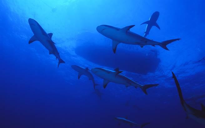 女子潛入水底20公尺,發現自己被200隻鯊魚包圍(示意圖/達志影像)