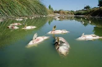 釣不到魚 4男怒買16瓶毒藥猛倒河 22萬條魚當場慘死