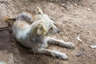愛犬忘在休息站 26天後門口有動靜 全家一看秒淚崩