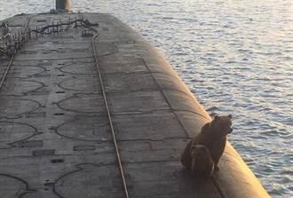 不留情 俄軍擊殺闖入海軍基地的母熊與小熊