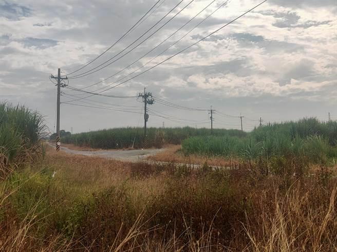 因應台商回流,經濟部在全台找地,台糖農場變產業園區,台南新市產業園區即是一處,占地約98公頃。(莊曜聰攝)