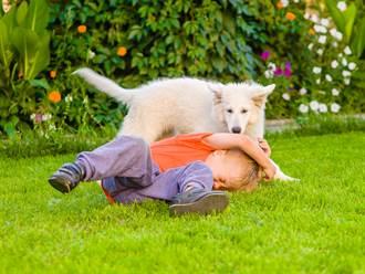 猛犬發狂撲咬男童不鬆口 路人驚險救援嚇傻:肉都沒了