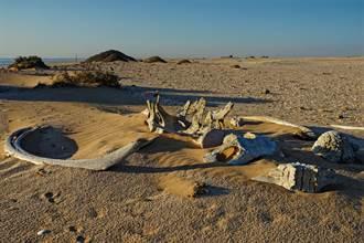 陸地驚見海巨人 地底下6公尺挖出鯨魚骨骸 考古學家驚呆