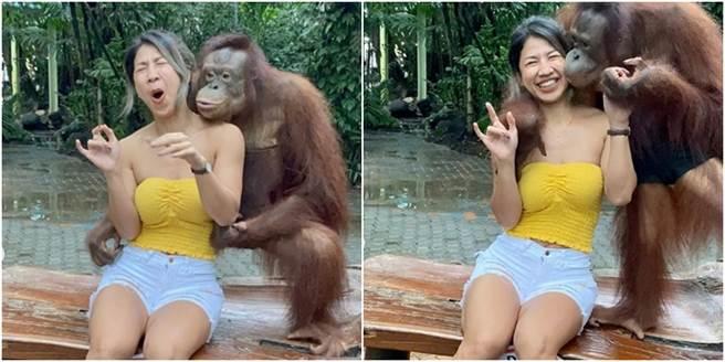 一名身材姣好的正妹,遭紅毛猩猩又親又抱,甚至是襲胸,令她驚慌失措。(圖/翻攝自IG oummy_thebootymaker)