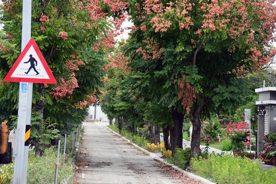 台東縣政府進行車站門戶景觀道路改造已接近完工,把更多道路空間留給行人。(莊哲權攝)