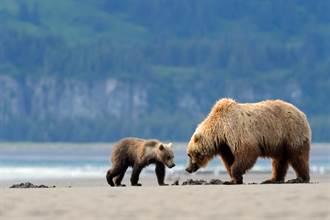 棕熊帶寶寶爬上潛艇坐甲板休息 下秒遭槍殺跌落海中