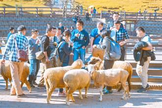 清境農場綿羊秀遭批 馮世寛神回應 網笑到流淚