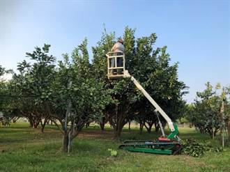 為台灣果園量身訂做 台南農改場研發新型高空作業車