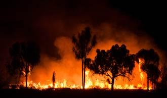澳洲野火意外燒出新物種「大袋鼯」 專家憂:未來恐消失