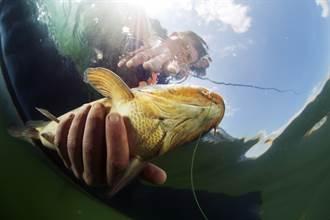 游泳捕魚硬塞口中 活魚瘋狂掙扎猛鑽喉嚨漁夫險GG