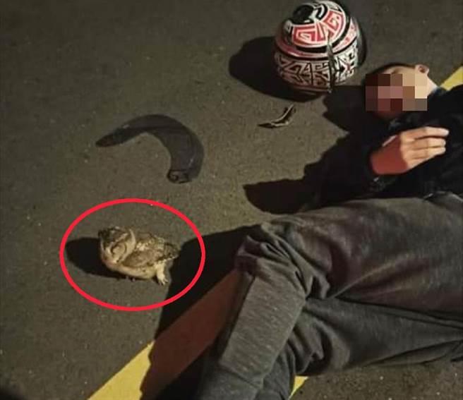 板橋一名機車騎士慘遭貓頭鷹撞護目鏡,摔車受傷,倒地時還「人鳥對望」,最後貓頭鷹飛走,「肇事逃逸」了。(翻攝照片/民眾提供)
