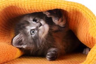 抱毛毯搭地鐵突探出小奶貓 融化男乘客秒當爸懷中餵奶