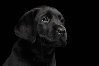飼主掛上過世愛犬畫像 家中狗弟弟反應全網淚崩