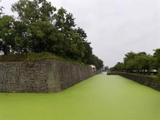 京都400年二條城遭「抹茶奶綠」攻陷 居民驚:這輩子沒見過