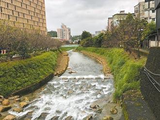 汐止生態工法整治 康誥坑溪成亮點