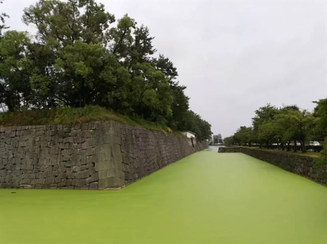 二條城外的護城河,變成抹茶色,引起網友討論。(翻攝推特)