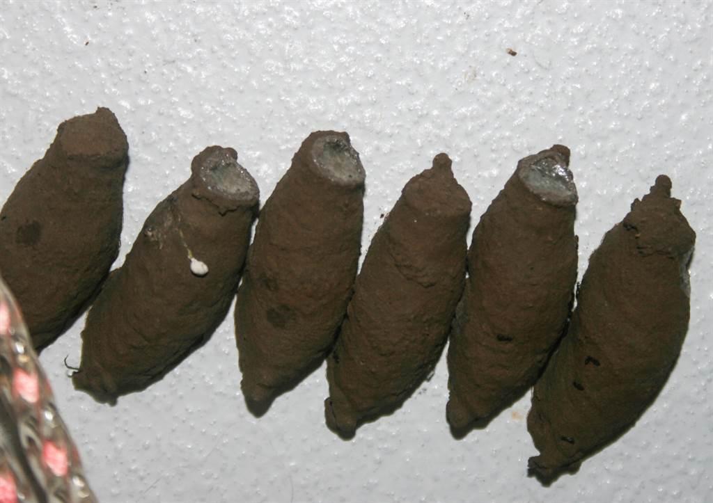 澳洲一名屋主發現,家中磁磚上竟黏著7顆大番薯(示意圖/達志影像)