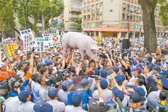 美動保團體稱:曾告知國民黨 抽搐豬隻影片與瘦肉精無關