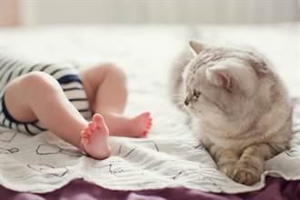 不滿小主人加入 高冷貓故意不理寶寶 媽憂心看監視器被暖爆