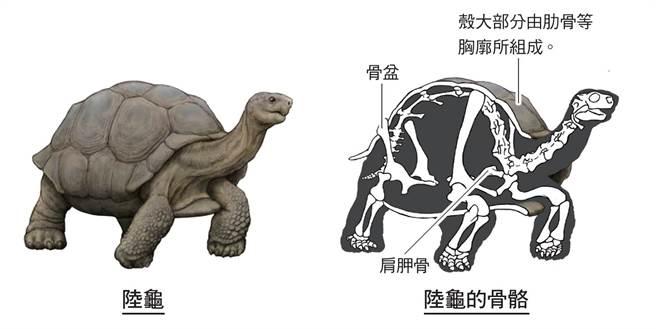 烏龜人的演化。(圖/三采文化提供)