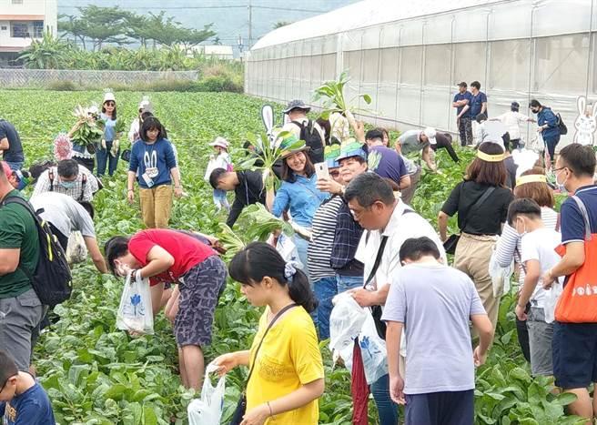 「2020美濃白玉蘿蔔與好豆季」活動熱鬧開幕,吸引大批民眾到田間拔蘿蔔。(林雅惠攝)