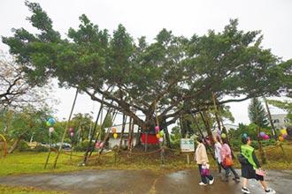 百歲榕樹重生 月眉國小師生祈福
