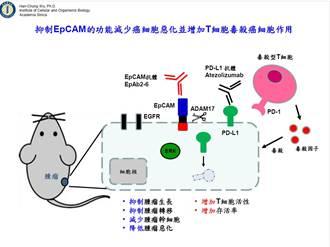 癌症治療新曙光 中研院首創新抗體 破解癌症惡化關鍵機制