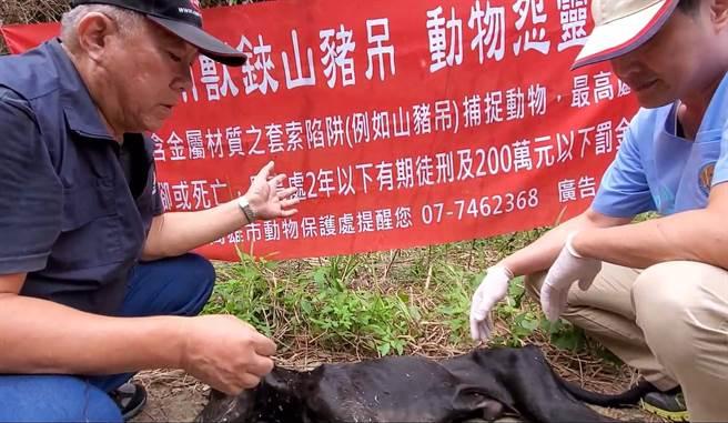 台灣動物緊急救援小組救援團隊到六龜營救一隻重傷的浪浪,令人遺憾的是,流浪狗已經傷重死亡。(台灣動物緊急救援小組提供/林瑞益高雄傳真)