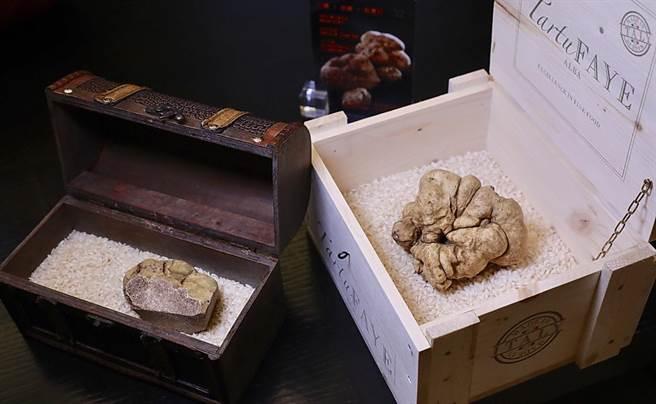 三二行館每年引進頂級的「義大利阿爾巴白松露」以饗食客,今年照例搶得頭香。(圖/三二行館)