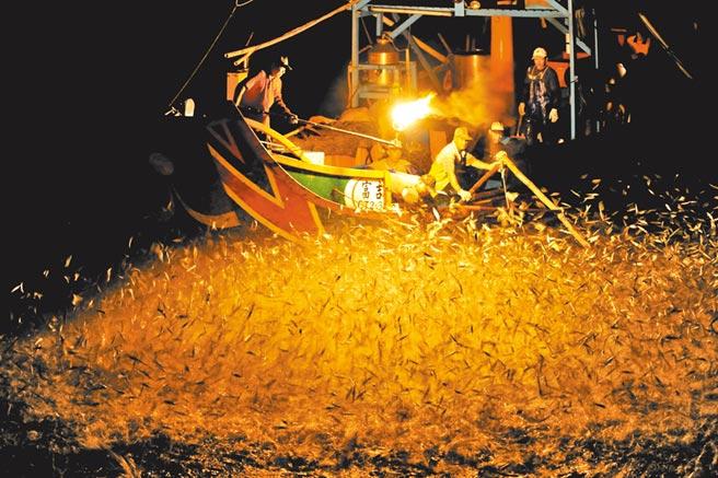 金山傳統漁法「蹦火仔」作業,吸引大批青鱗魚躍出水面,畫面令人震撼。(新北市農業局提供)