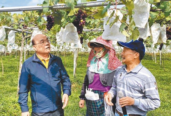 蘇貞昌15日到草屯鎮視察擴大灌區政策的推動情況,並和在地葡萄果農談話,了解今年度的收成情形。(黃立杰攝)