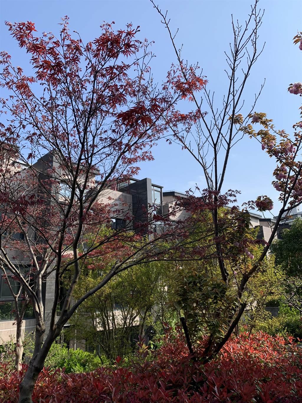 作者在上海時居住的小區。(作者提供)