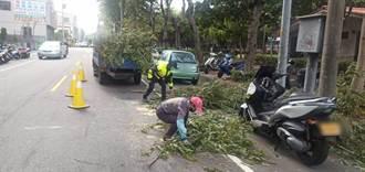 路樹攔腰折斷 中市警火速救援解除壓車危機