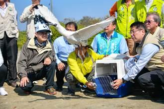 黑面琵鷺保育季發追緝令 找到野放黑琵行蹤有賞