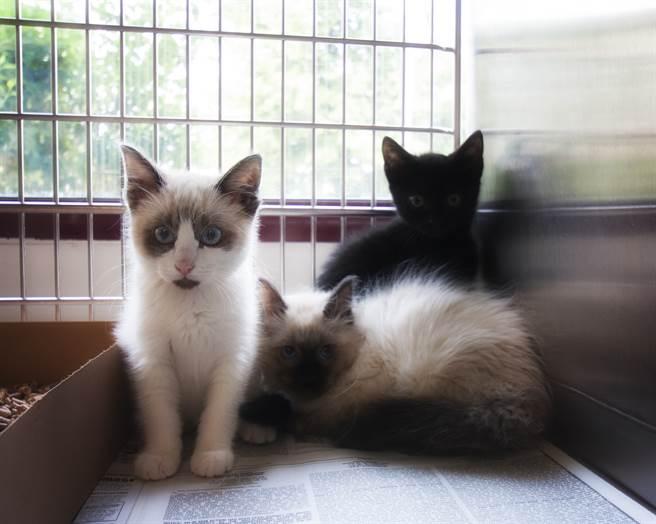 華裔母女想養白貓,沒想到卻遭到拒絕,原因竟是「貓只想跟金髮主人住」(示意圖/達志影像)