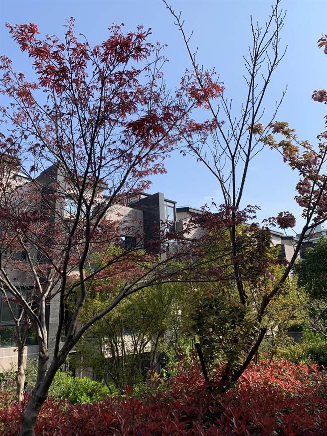 作者在上海时居住的小区。(作者提供)