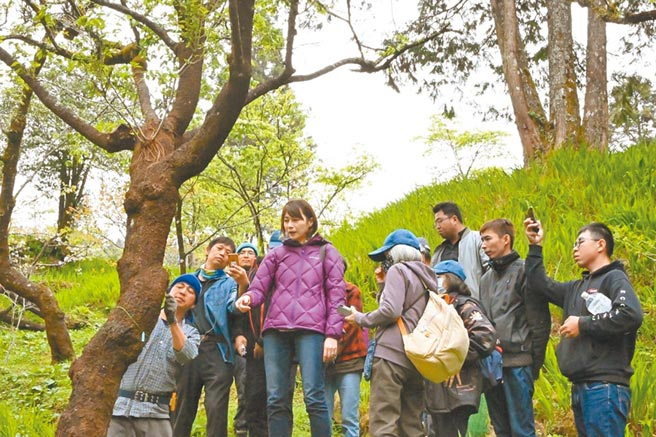 树医詹凤春(左四)除医治园内樱花树外,也是每年嘉义林管处樱花讲座的主讲人。(嘉义林管处提供/张亦惠嘉县传真)