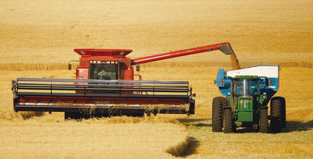 中國在本產季自美進口的粗糧(以玉米為主)將創新高,向國外採購的小麥也將寫下25年來最多。圖/美聯社