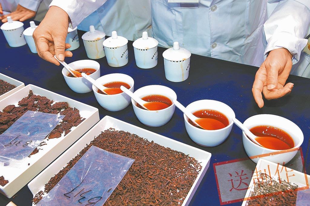 茶王爭霸賽中不同的六堡茶品種。(《南國早報》提供)