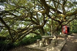 新北樹保大會6月停擺至今快半年 景觀處:有案才會開