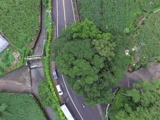 保護重要文畫綠色資產!苗栗空拍健檢老樹