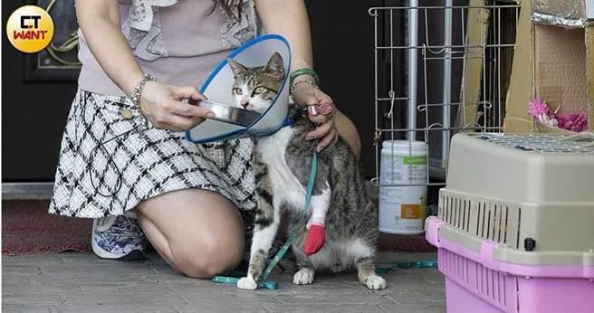常拯救流浪貓狗的麗莎控訴,苗栗縣政府放任民眾濫放捕獸夾,導致縣內常看到傷痕累累的斷肢的貓狗。(圖/黃威彬攝)