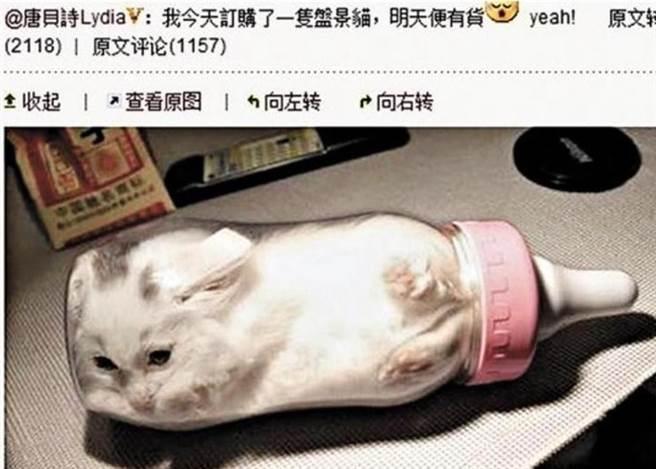 唐贝诗曾开玩笑在微博上传小猫塞奶瓶照,虽然澄清是假照片,但仍被骂翻。(翻摄自微博)