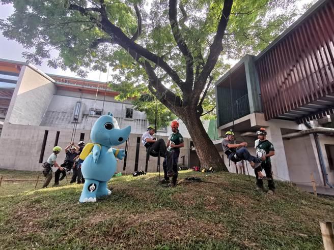 台南市左鎮化石園區推出「樹梢上的探險家」攀樹體驗活動。(劉秀芬攝)