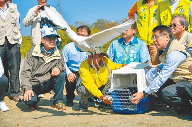 台南市農業局發起尋找野放黑面琵鷺活動,希望鳥友協尋今年初野放的2隻黑琵「T85」、「T94」。(台南市生態保育學會提供/莊曜聰台南傳真)