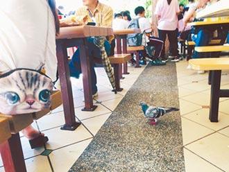動物園百鴿陪吃 家長憂啄傷幼童