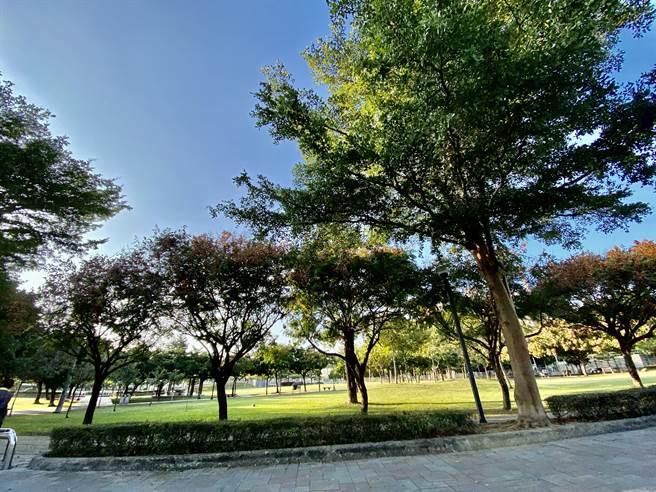 占地5000坪的廍興公園,是台中市北屯區的綠海。(盧金足攝)