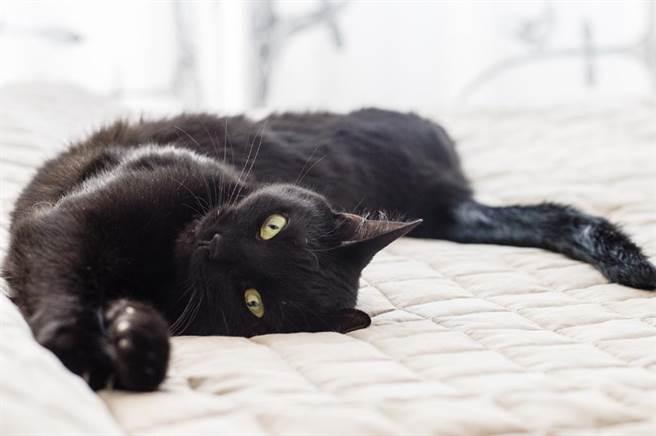 軟Q黑貓1秒倒立 超狂神技網全看傻(示意圖/達志影像)